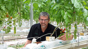 Marcus Brandsema inside his tomato glasshouse with his coco coir media. Coco coir is an inert (sterile) media perfect for hydroponics. It's also environmentally friendly, so much coco fibre is recycled to make new products all over the world and coco coir for growing is an effective way to reduce waste after coconuts have been harvested.